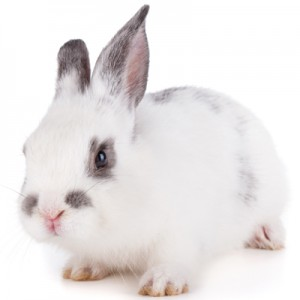Small rabbit on a white background